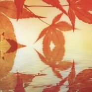 Autumn leaves Japanese style iPhone8 Wallpaper