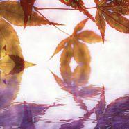 Autumn leaves lake iPhone8 Wallpaper