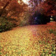 Autumn leaves fallen leaves iPhone8 Wallpaper
