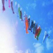 Carp streamer sky iPhone8 Wallpaper