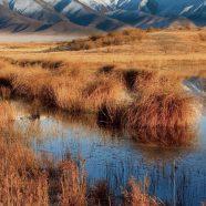 Grassland landscape iPhone8 Wallpaper