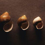 Cool seashell iPhone8 Wallpaper