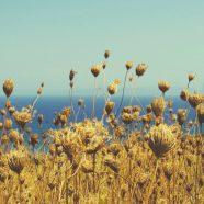 Landscape  flower  sea iPhone8 Wallpaper