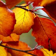 Autumn Leaves Nature iPhone8 Wallpaper