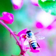 Bee blur flower nature iPhone8 Wallpaper