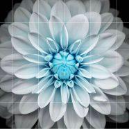 Black-and-white flower borders shelf iPhone8 Wallpaper