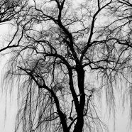 Landscape trees black and white iPhone8 Wallpaper