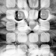Animal cat shelf monochrome iPhone8 Wallpaper