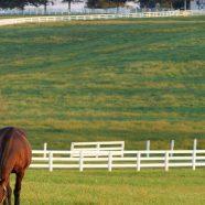 Landscape farm horse green iPhone8 Wallpaper