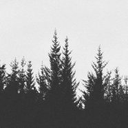 Landscape forest monochrome iPhone8 Wallpaper