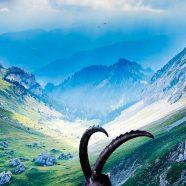 Rocky mountain landscape iPhone8 Wallpaper