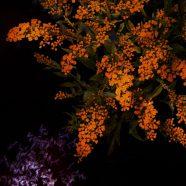 Orange flower cool iOS9 iPhone8 Wallpaper