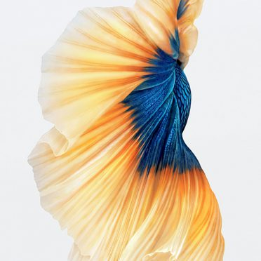 Fish white iPhone6s Cool iPhone8 Wallpaper