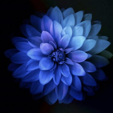 Flower Blue iPhone8 Wallpaper