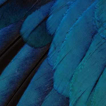 Pattern feathers blue green cool iOS9 iPhone8 Wallpaper