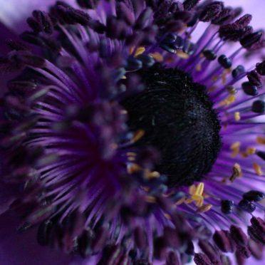 purple  flower iPhone8 Wallpaper