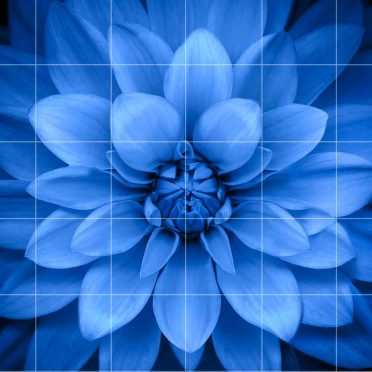 Shelf border blue black flower iPhone8 Wallpaper