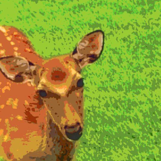 Ciervo animal Fondo de Pantalla SmartPhone para Android