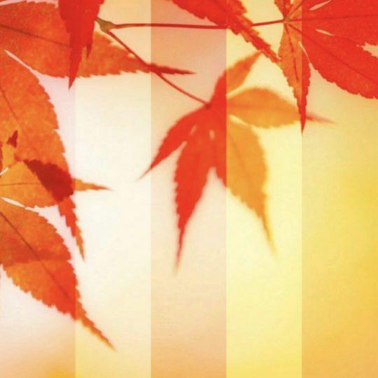 Caída de las hojas de otoño Fondo de Pantalla SmartPhone para Android