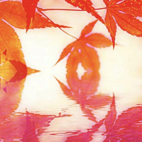 Follaje de otoño superficie del agua Fondo de Pantalla SmartPhone para Android
