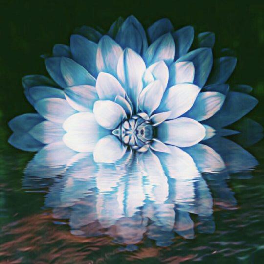 Flor fresco Fondo de Pantalla SmartPhone para Android