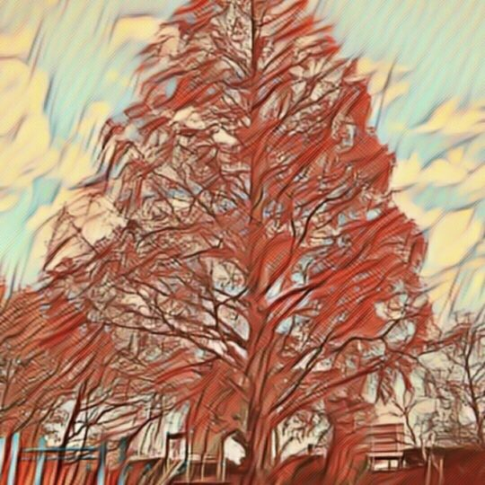 Parque de árboles Fondo de Pantalla SmartPhone para Android