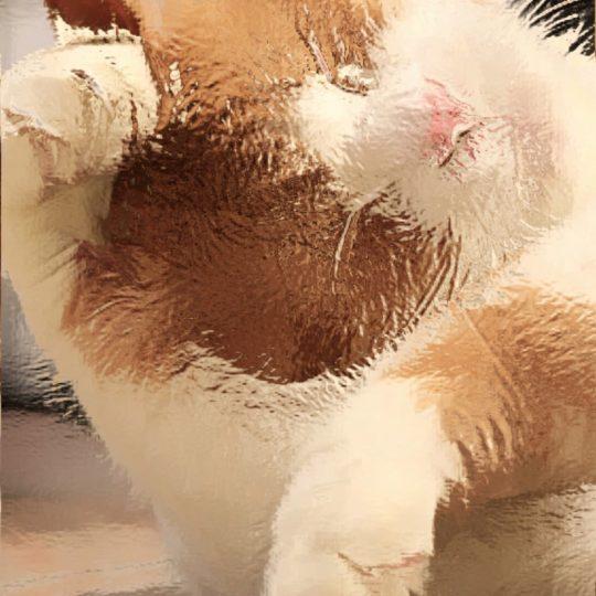 gato Fondo de Pantalla SmartPhone para Android