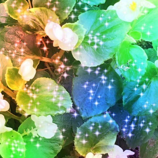 Luz de la flor Fondo de Pantalla SmartPhone para Android