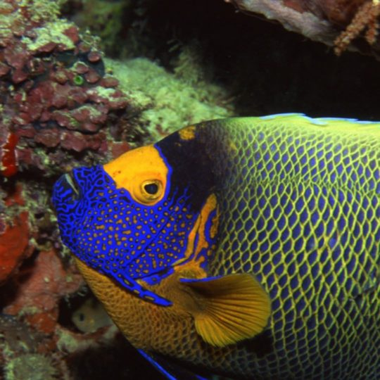 Animal pescado Fondo de Pantalla SmartPhone para Android