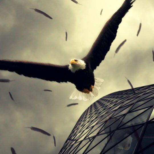 águila Animal Fondo de Pantalla SmartPhone para Android