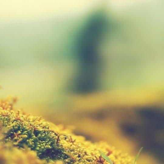 ki flores naturales Fondo de Pantalla SmartPhone para Android