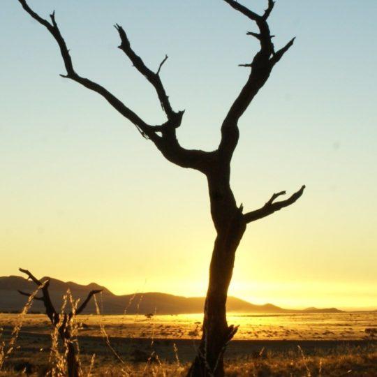 Paisaje de árboles muertos Fondo de Pantalla SmartPhone para Android