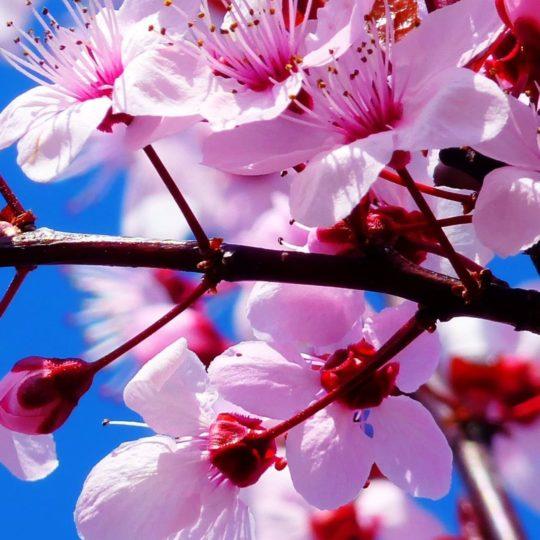 Flor natural de color rosa Fondo de Pantalla SmartPhone para Android