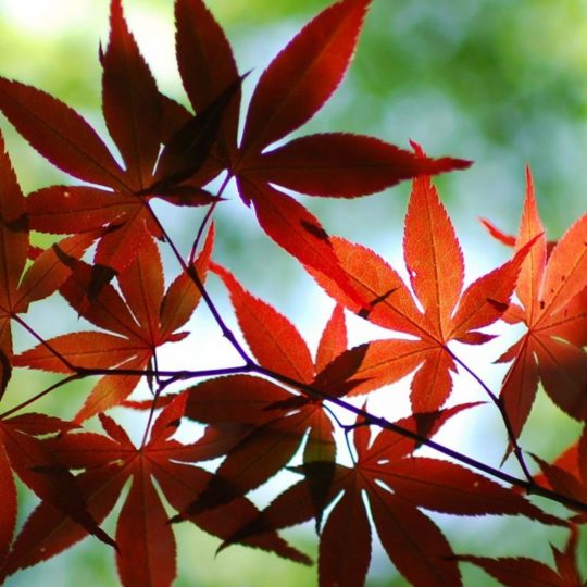 hojas de otoño de naranja natural Fondo de Pantalla SmartPhone para Android