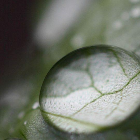 gotas de agua natural Fondo de Pantalla SmartPhone para Android