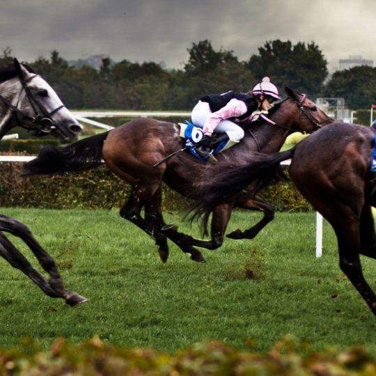 carrera de caballos de los Animal Fondo de Pantalla SmartPhone para Android