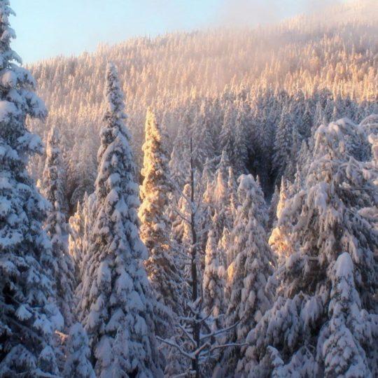 Blanco como la nieve paisaje de montaña Fondo de Pantalla SmartPhone para Android