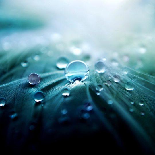 cloroplasto Natural Fondo de Pantalla SmartPhone para Android