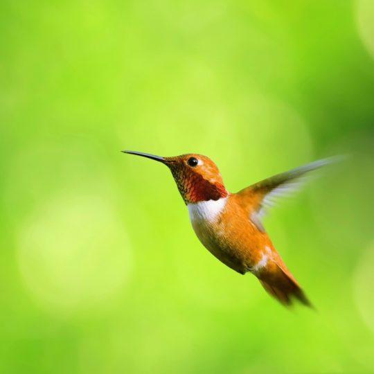 Animal Pájaros verde Fondo de Pantalla SmartPhone para Android