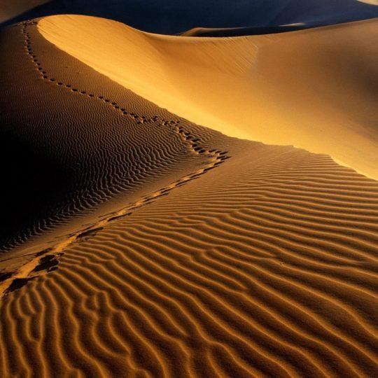 paisaje del desierto Fondo de Pantalla SmartPhone para Android