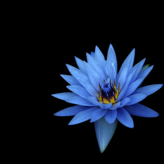 azul de flores naturales Fondo de Pantalla SmartPhone para Android