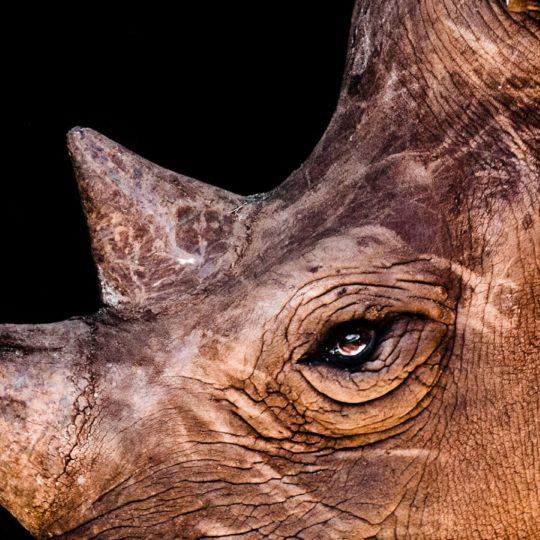 rinoceronte Animal Fondo de Pantalla SmartPhone para Android