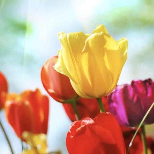planta de flor colorido Fondo de Pantalla SmartPhone para Android