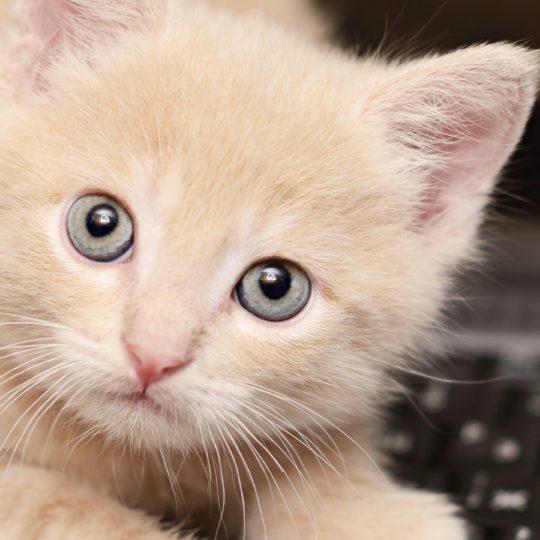 Teclado Animal gato las mujeres con niños Fondo de Pantalla SmartPhone para Android