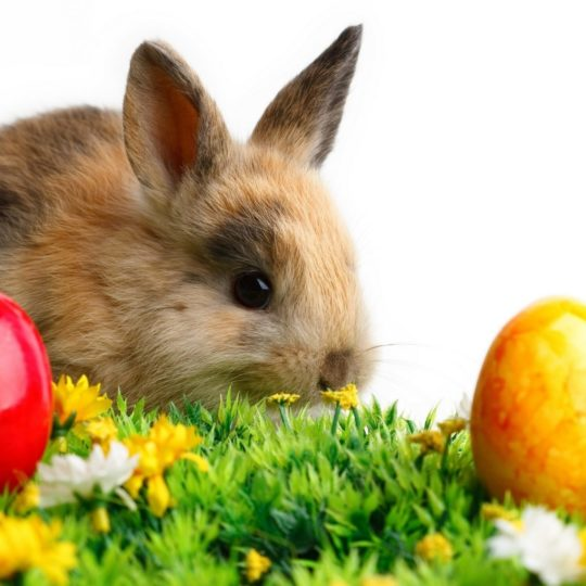 conejo Animal Fondo de Pantalla SmartPhone para Android