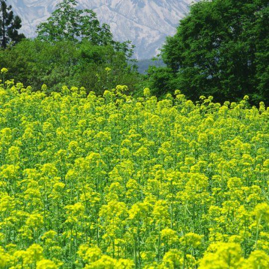 Paisaje de jardín de flores verde Fondo de Pantalla SmartPhone para Android