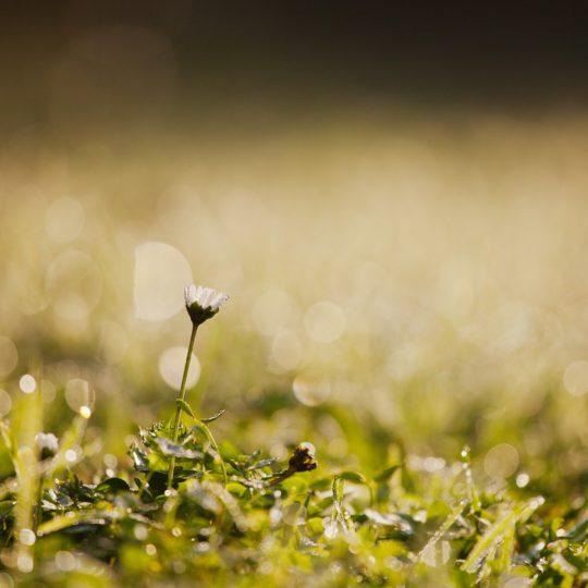 Flor natural verde blanco Fondo de Pantalla SmartPhone para Android