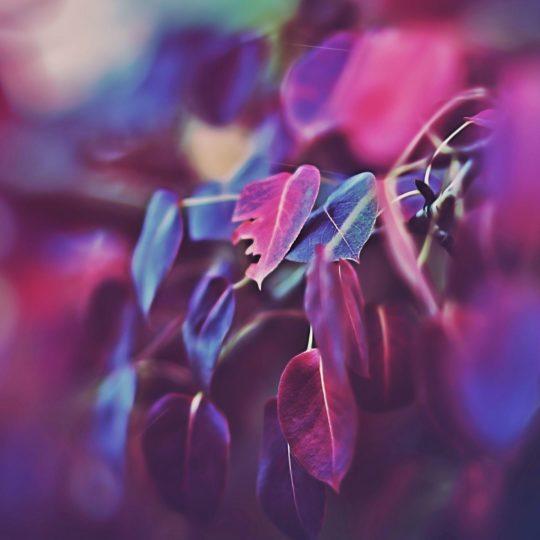 Natural de la hoja de color púrpura Fondo de Pantalla SmartPhone para Android