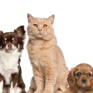 favorable a las mujeres de animales perro gato Fondo de Pantalla de Apple Watch