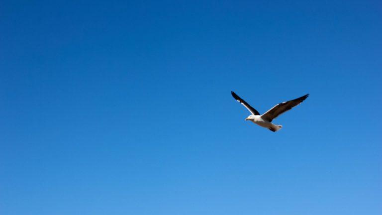 Cielo de aves animales Fondo de escritorio de PC / Mac